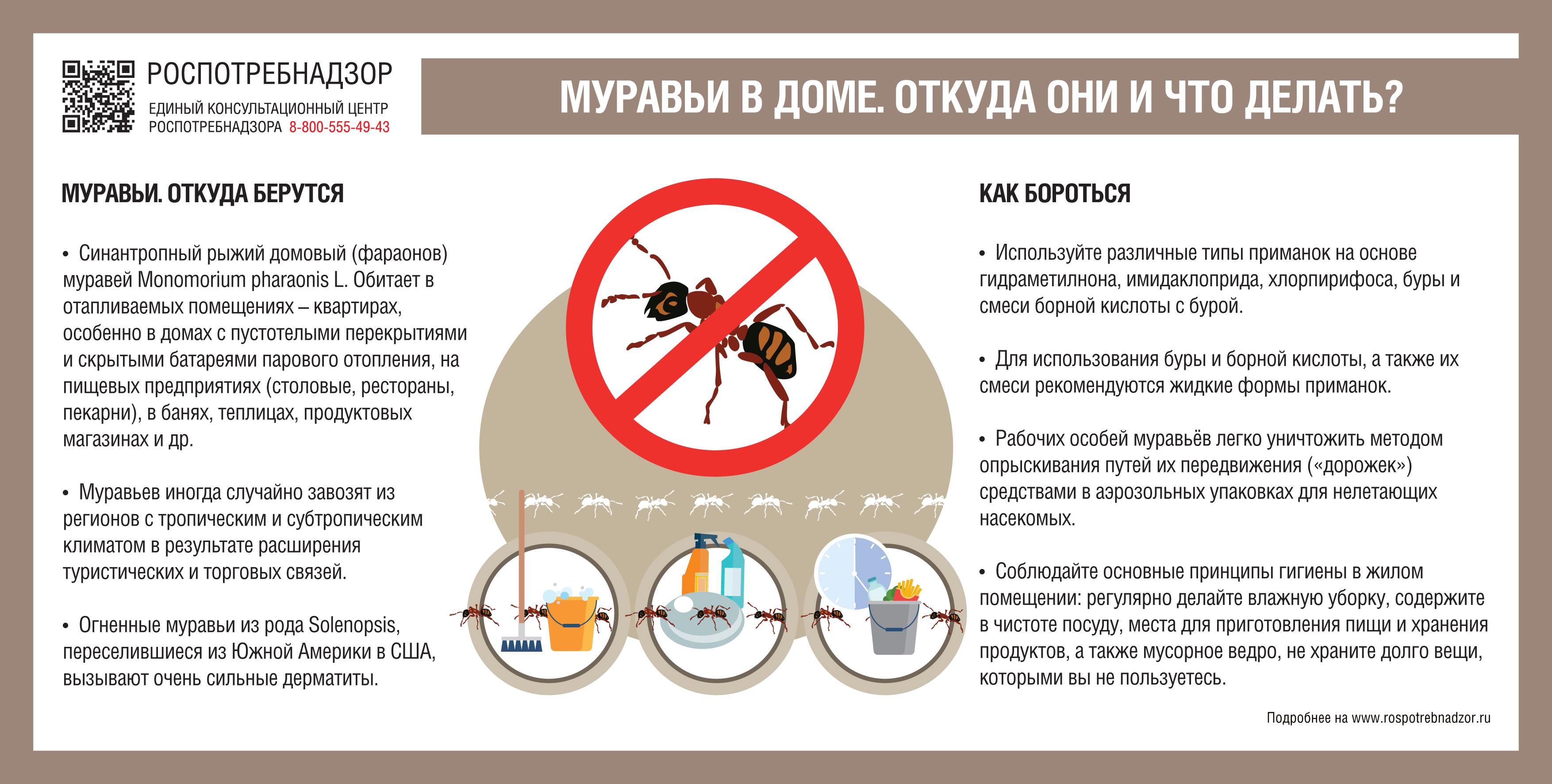 О рекомендациях как защитить жилое помещение от домовых муравьев